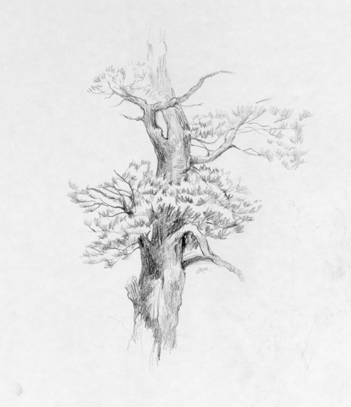 How To Sketch A Tree. Tree Sketch.